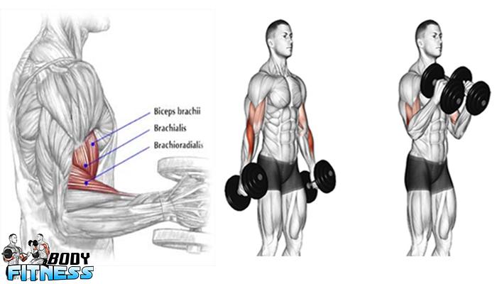 5 เทคนิคปั้นกล้ามเนื้อหน้าแขน (Biceps)
