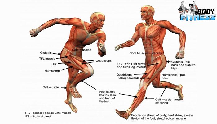 วิธีเบื้องต้นในการสร้างกล้ามเนื้อส่วนล่าง